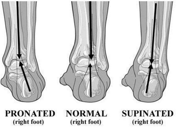 Strengthen Your Ankles Feet To Improve Performance Prevent Injuries